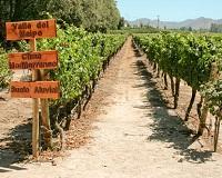 chile wine-tours